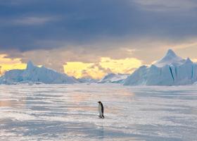 alone penguin